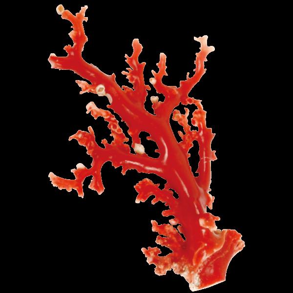 珊瑚・べっこう買取